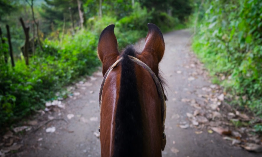 Suzette Bernadine Belgarde on Equine-Assisted Coaching