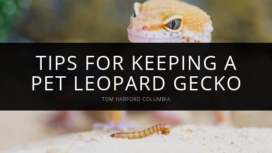The Care and Keeping Of Your Pet Leopard Gecko, With Tips From Tom Harford Columbia