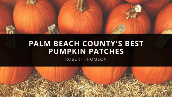 Waterfront Properties' Robert Thomson of Jupiter shares Palm Beach County's best pumpkin patches