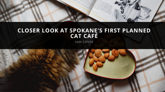 Sam Cover takes closer look at Spokane's first planned cat café